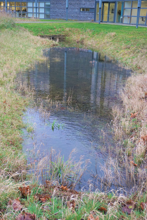 photo of a swale in action